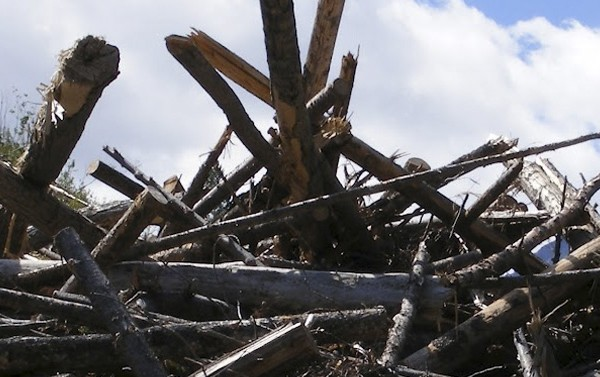 Logging Waste